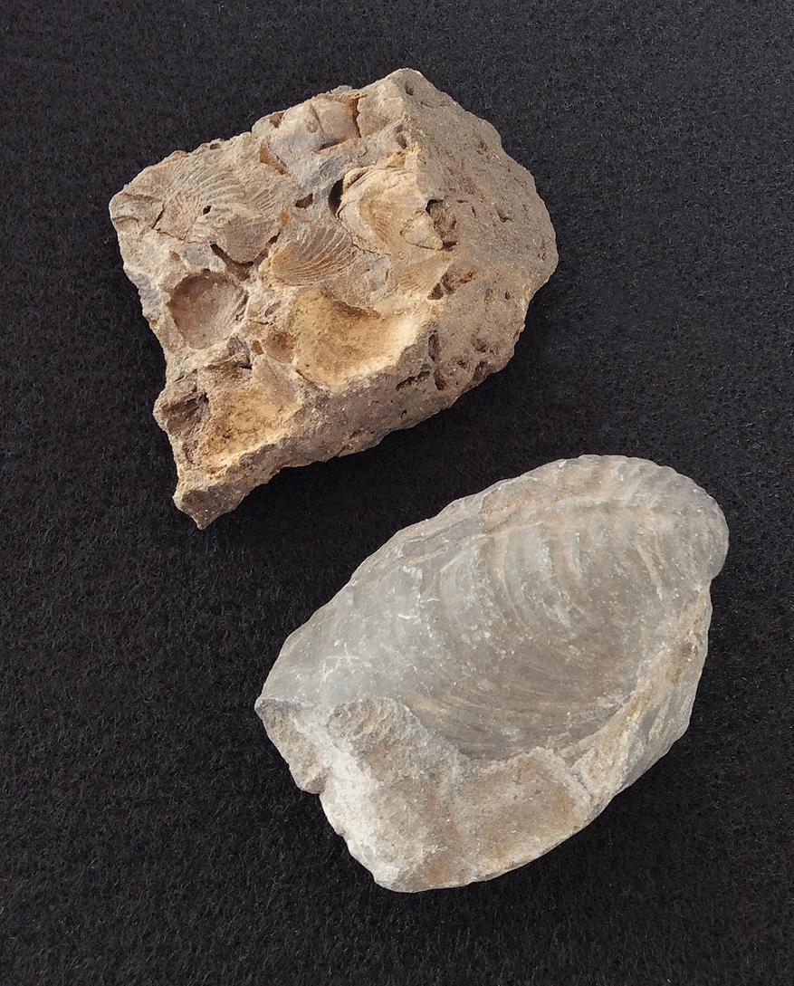 Field Fossils